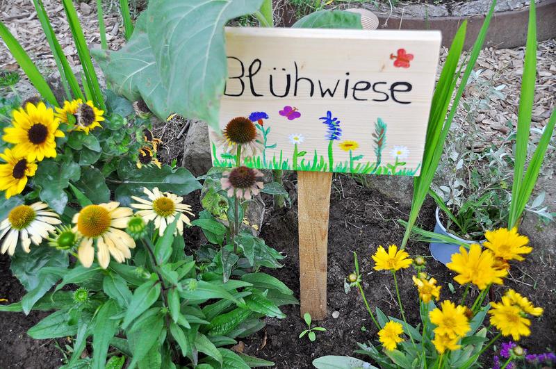 Bild vergrößern: Viele spezielle Pflanzen, unter anderem auch eine Blühwiese, bieten den Schmetterlingen die richtige Nahrungsgrundlage.